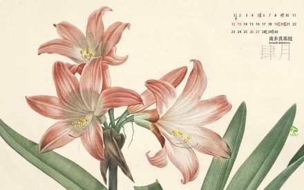 2014植物手绘月历.作者:阿蒙